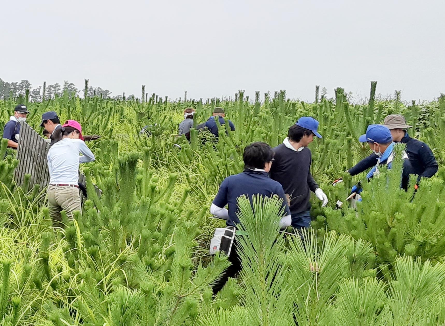 海岸防災林「ノースジャパン100年復興の森」再生活動(ノースジャパン素材流通協同組合様主催)2020年7月31日